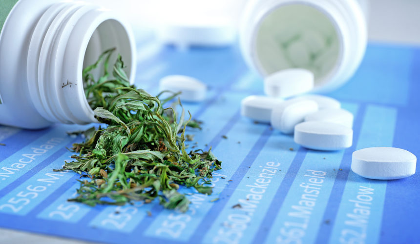 First government supported medical cannabis study on Opioid Use